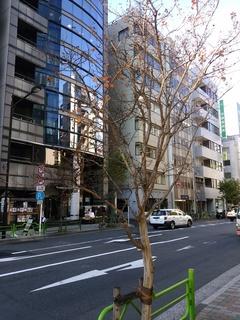11.5 街路樹.jpg