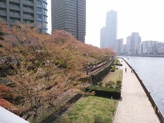 14残桜1.jpg