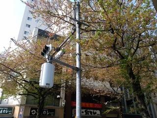 1 葉桜.jpg