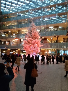 24 クリスマスツリー.jpg