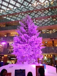 26 紫.jpg