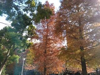 3 木々.jpg