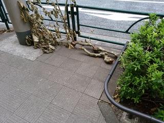 4 街路樹枝.jpg