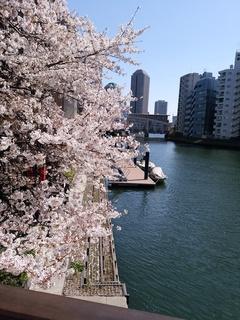 5 船と桜.jpg
