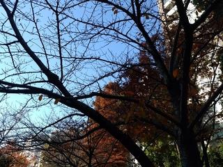 5 裸の木.jpg